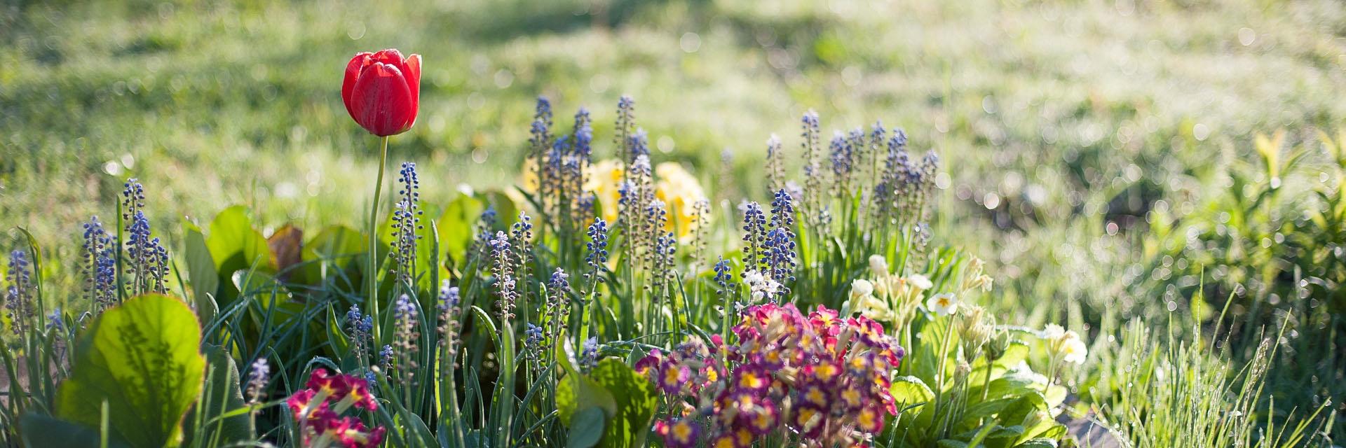 W kwiatowym ogrodzie Etno Kwatery Agroturystycznej Korolowa Chata
